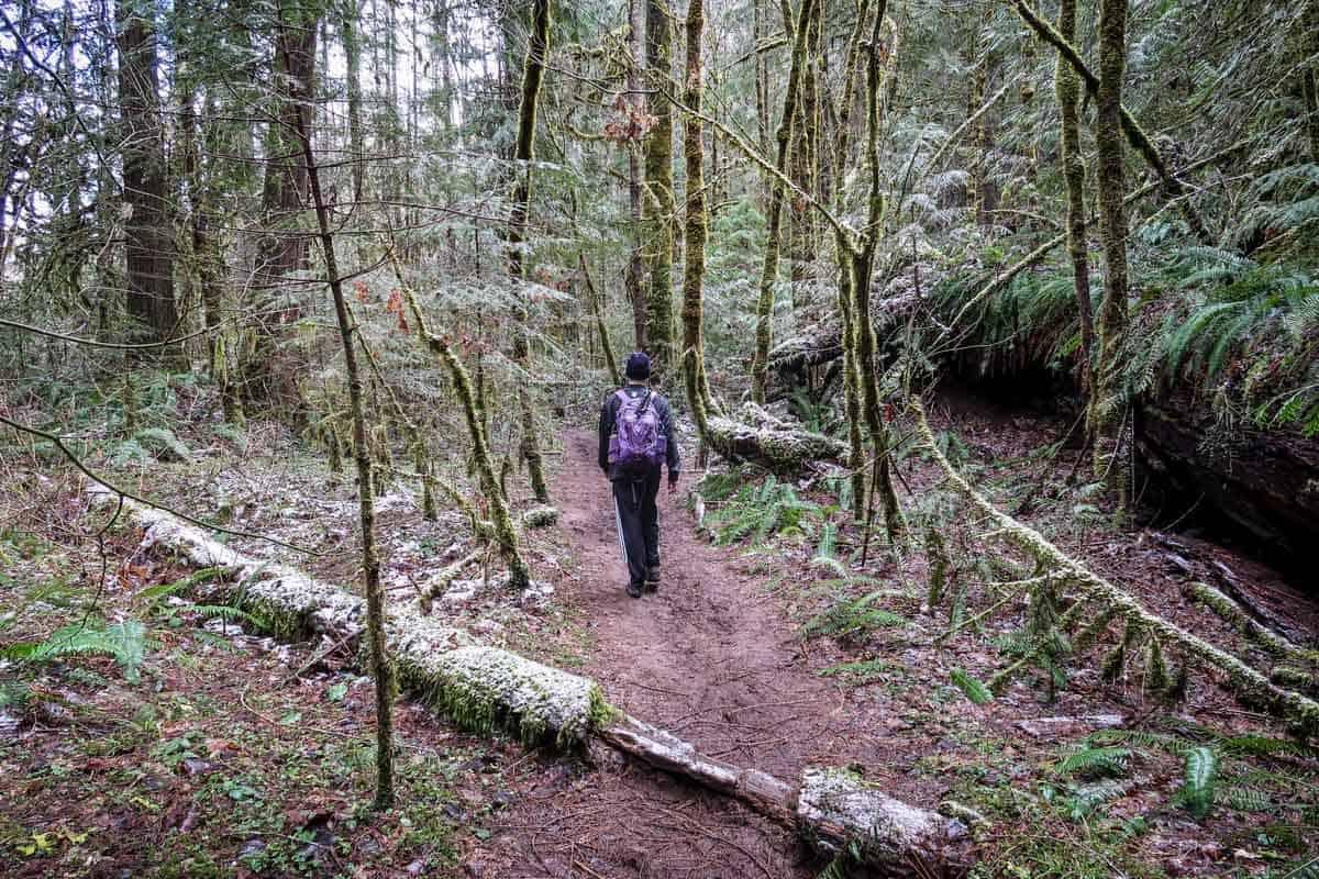 McCredie Hot Springs Hiking Trail