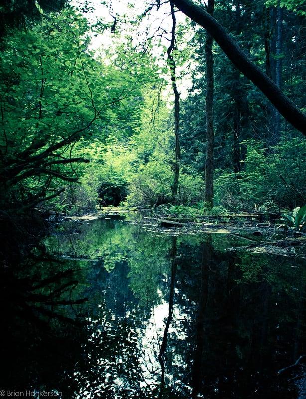 Hiking around Beaver Lake Park Best Hikes in Washington State