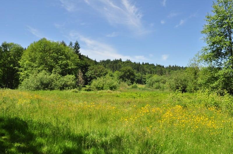 Hiking around Evans Creek Preserve Best Hikes in Washington State