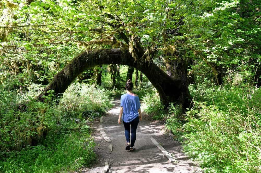 Hiking around Hoh Rainforest, Hall of Moss Trail Best Hikes in Washington State