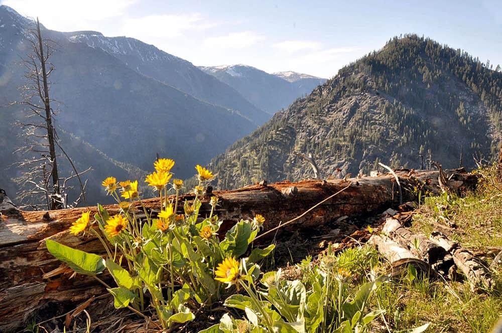 Hiking around Icicle Ridge Best Hikes in Washington State