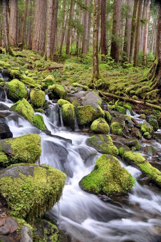 Hiking around Sol Duc Falls Best Hikes in Washington State