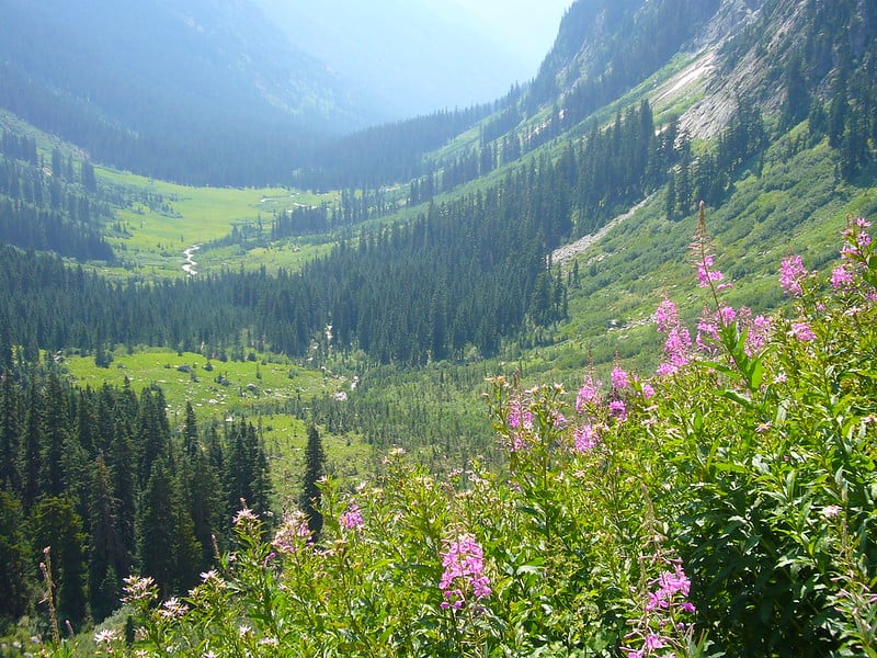 Hiking around Spider Meadow Trail Best Hikes in Washington State