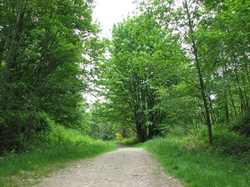 Hiking around Wildside Best Hikes in Washington State