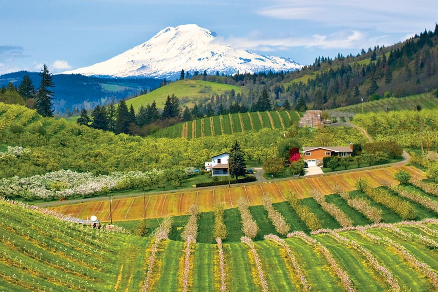 Hood River Wineries: Cathedral Ridge Winery