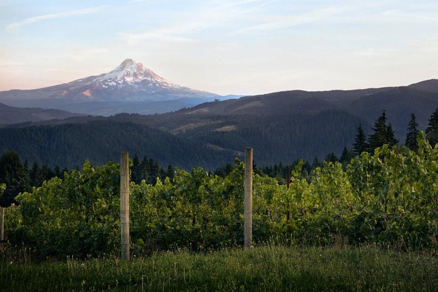 Hood River Wineries: Cerulean Wine