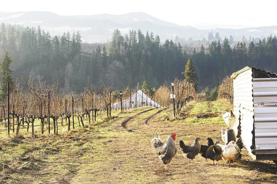Hood River Wineries: Hiyu Wine Farm