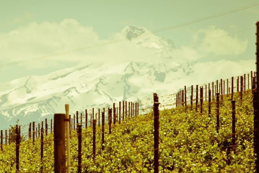 Hood River Wineries: Savage Grace Wines