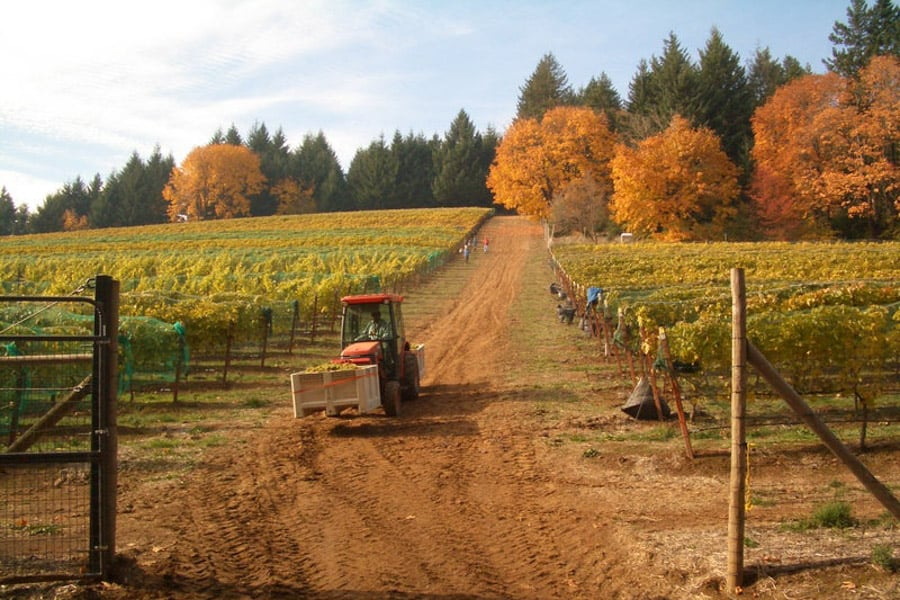 Hood River Wineries: Stoltz Winery