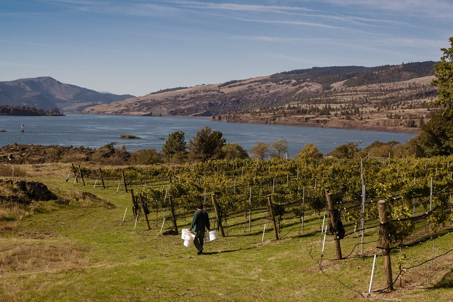Hood River Wineries: Syncline Winery
