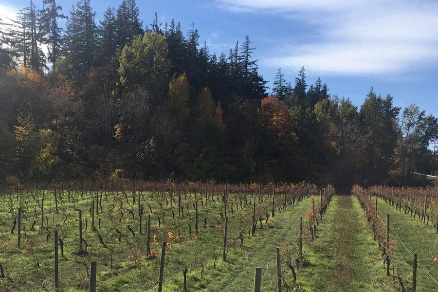 Hood River Wineries: Vietno Winery